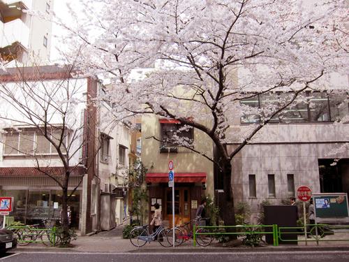 shirata11.jpg