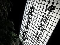 kiyoka.jpg