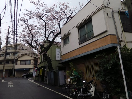 masanoya01